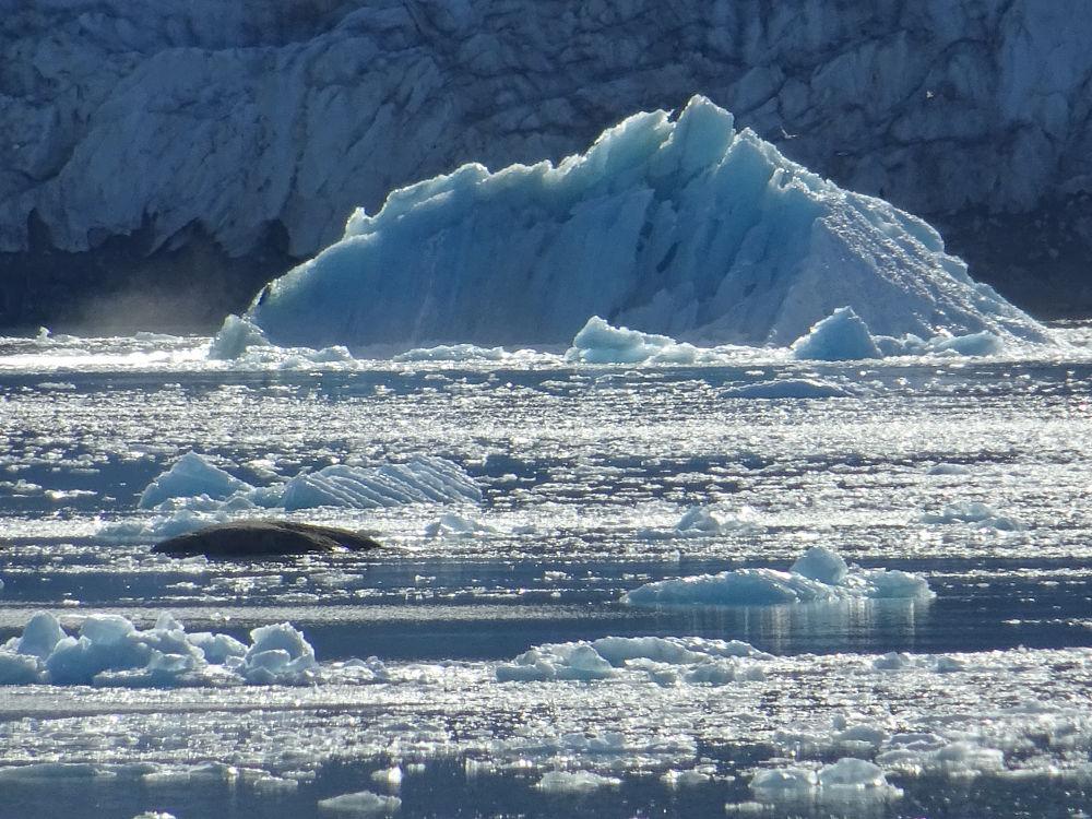 iceberg-Smeerenburg-Glacier-Svalbard