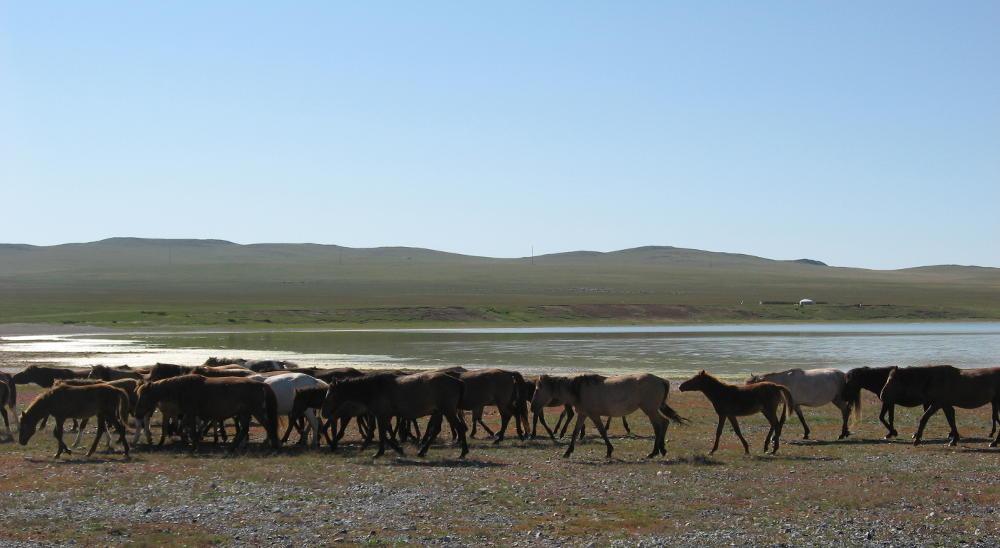 mandrie Guun Galuut - Mongolia
